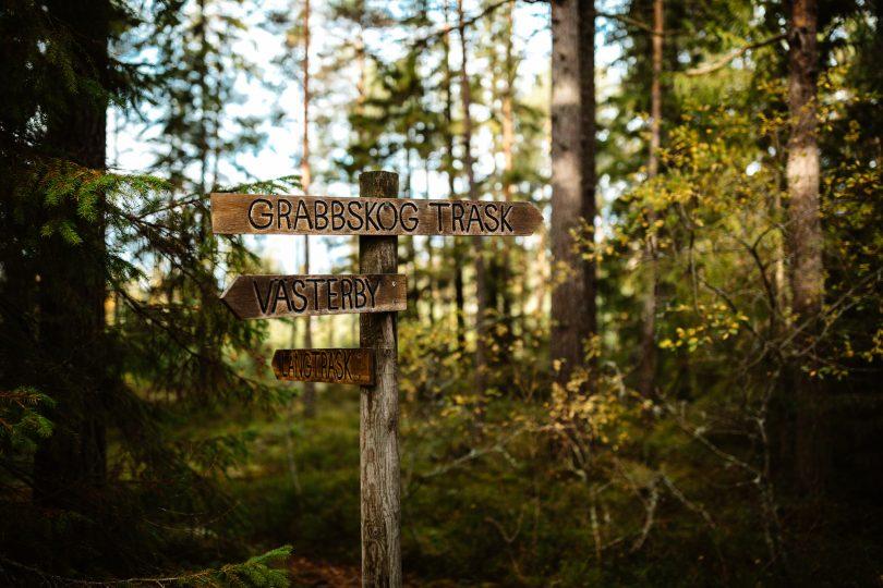 Vägskyltar mitt i skogen